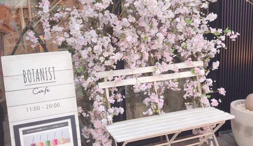 sakura(cherry blossom) photo spot in Harajuku,Tokyo🌸